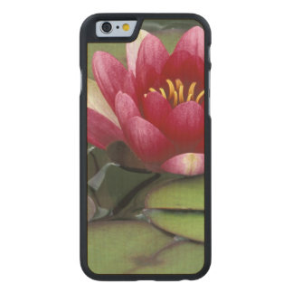 USA, Washington State, Seattle. Water lily and Carved® Maple iPhone 6 Slim Case