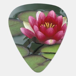 USA, Washington State, Seattle. Water lily and Guitar Pick