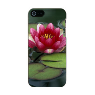 USA, Washington State, Seattle. Water lily and Incipio Feather® Shine iPhone 5 Case