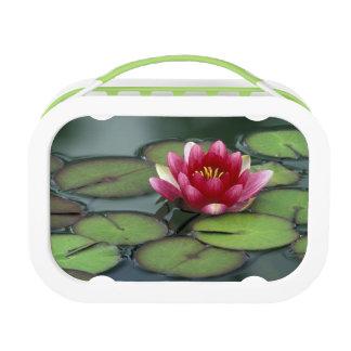 USA, Washington State, Seattle. Water lily and Lunch Box