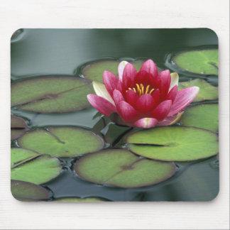 USA, Washington State, Seattle. Water lily and Mouse Mat