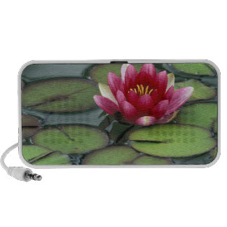 USA, Washington State, Seattle. Water lily and iPhone Speakers
