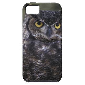 USA, Washington State, Seattle, Woodland Park iPhone 5 Cases