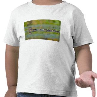 USA, Washington State, Wood Duck,female, Tee Shirts