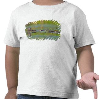 USA, Washington State, Wood Duck,female, Tee Shirt