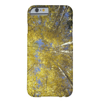 USA, Washington, Stevens Pass Fall-colored aspen Barely There iPhone 6 Case