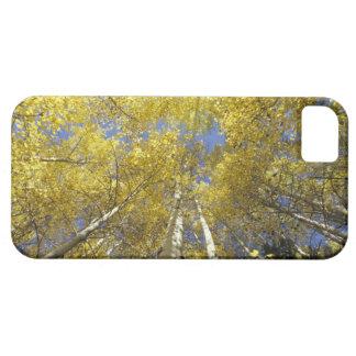 USA, Washington, Stevens Pass Fall-colored aspen Case For The iPhone 5