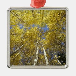 USA, Washington, Stevens Pass Fall-colored aspen Christmas Ornament
