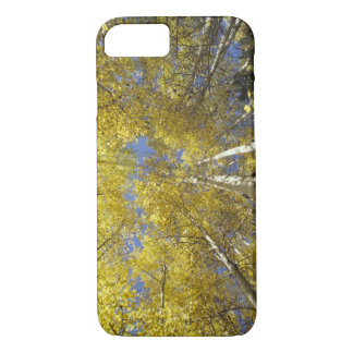 USA, Washington, Stevens Pass Fall-colored aspen iPhone 8/7 Case