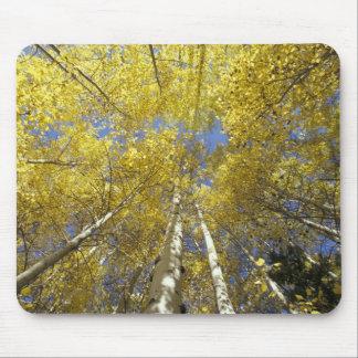 USA, Washington, Stevens Pass Fall-colored aspen Mouse Pad
