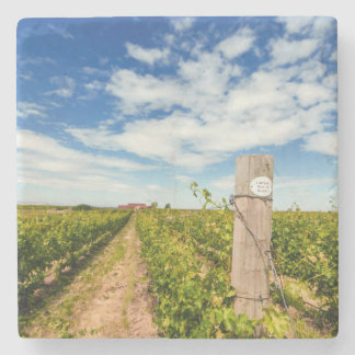 USA, Washington, Walla Walla. Cabernet Sauvignon Stone Coaster