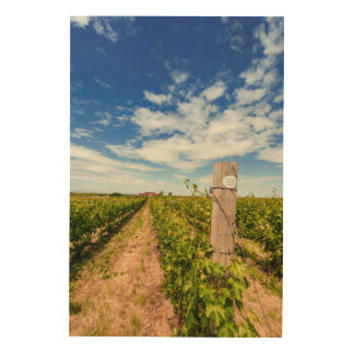 USA, Washington, Walla Walla. Cabernet Sauvignon Wood Print