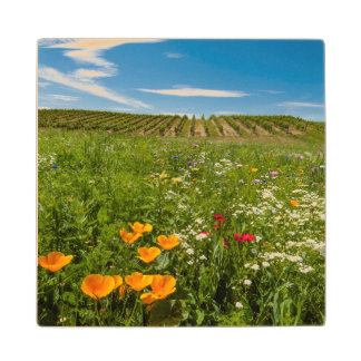 USA, Washington, Walla Walla. Wildflowers Wood Coaster