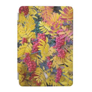 USA, Washington, Western Mountain Ash, Okanogan iPad Mini Cover