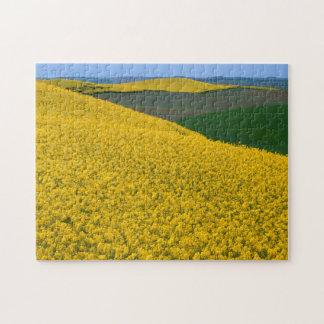 USA, Washington, Whitman County, Palouse, Canola Jigsaw Puzzle