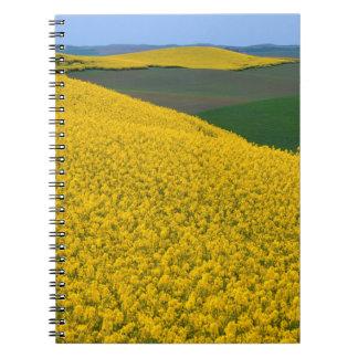 USA, Washington, Whitman County, Palouse, Canola Notebook