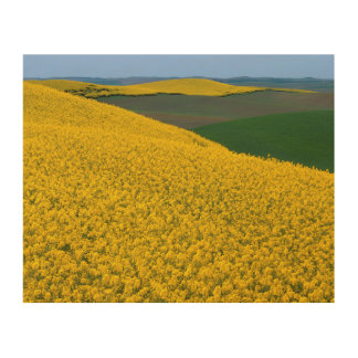 USA, Washington, Whitman County, Palouse, Canola Wood Wall Decor