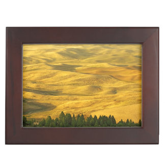 USA, Washington, Whitman County, Palouse, Wheat Keepsake Box