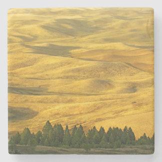USA, Washington, Whitman County, Palouse, Wheat Stone Coaster
