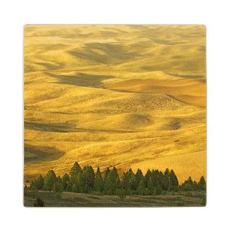 USA, Washington, Whitman County, Palouse, Wheat Wood Coaster