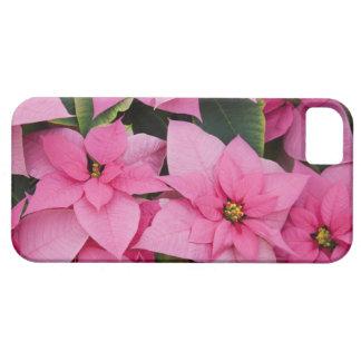 USA, Washington, Woodinville, Molbak's Nursery, 3 iPhone 5 Cover