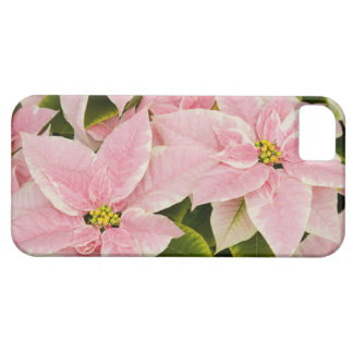 USA, Washington, Woodinville, Molbak's Nursery, 4 iPhone 5 Cases