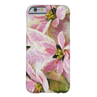 USA, Washington, Woodinville, Molbak's Nursery, Barely There iPhone 6 Case