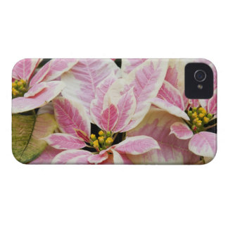 USA, Washington, Woodinville, Molbak's Nursery, Case-Mate iPhone 4 Cases