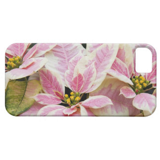USA, Washington, Woodinville, Molbak's Nursery, iPhone 5 Cover