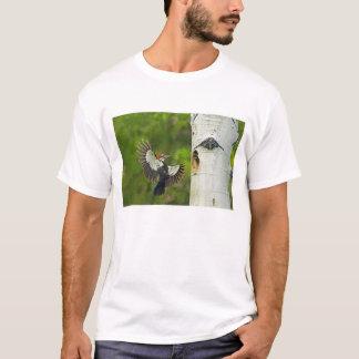 USA, Washington, Yakima. Male pleated T-Shirt
