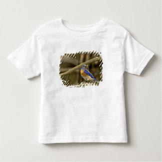 USA, Washington, Yakima. Male western bluebird Toddler T-Shirt