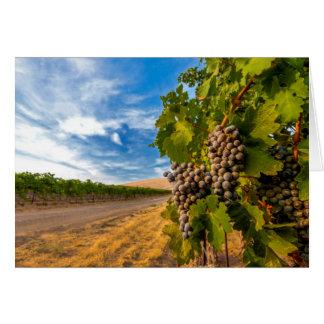 USA, Washington, Yakima Valley. Merlot Grapes Card