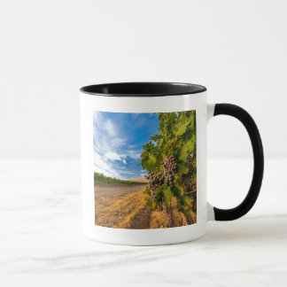 USA, Washington, Yakima Valley. Merlot Grapes Mug