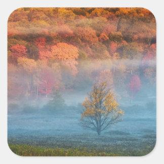 USA, West Virginia, Davis. Misty valley and Square Sticker