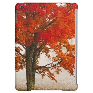 USA, West Virginia, Davis. Red maple in autumn