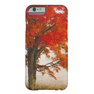 USA, West Virginia, Davis. Red maple in autumn Barely There iPhone 6 Case