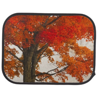 USA, West Virginia, Davis. Red maple in autumn Car Mat
