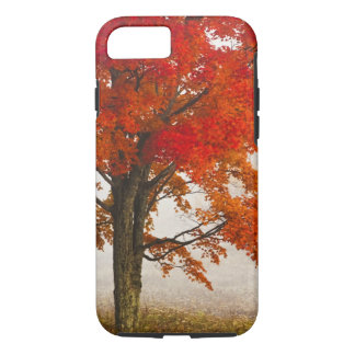 USA, West Virginia, Davis. Red maple in autumn iPhone 8/7 Case