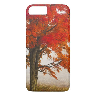 USA, West Virginia, Davis. Red maple in autumn iPhone 8 Plus/7 Plus Case