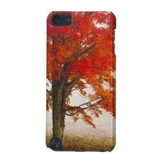 USA, West Virginia, Davis. Red maple in autumn iPod Touch 5G Covers