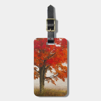 USA, West Virginia, Davis. Red maple in autumn Luggage Tag