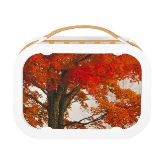 USA, West Virginia, Davis. Red maple in autumn Lunch Box