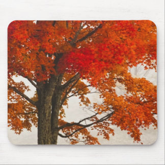 USA, West Virginia, Davis. Red maple in autumn Mouse Pad