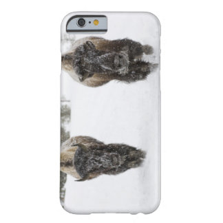 USA, WY, Yellowstone NP, American Bison (Bison Barely There iPhone 6 Case