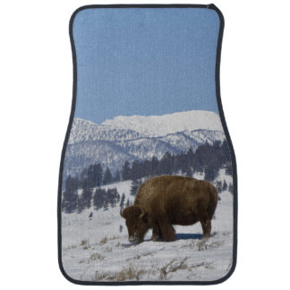 USA, WY, Yellowstone NP, American Bison Bison Car Mat