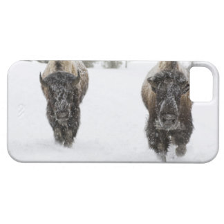 USA, WY, Yellowstone NP, American Bison (Bison Case For The iPhone 5