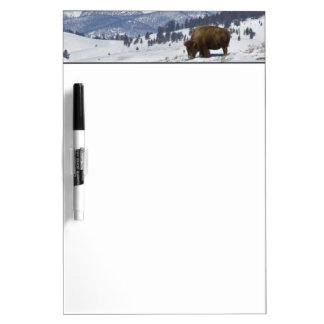USA, WY, Yellowstone NP, American Bison Bison Dry Erase Board