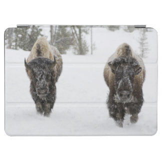 USA, WY, Yellowstone NP, American Bison (Bison iPad Air Cover
