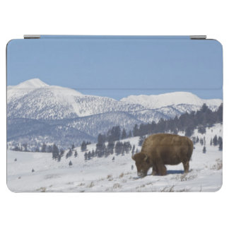 USA, WY, Yellowstone NP, American Bison Bison iPad Air Cover