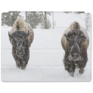 USA, WY, Yellowstone NP, American Bison (Bison iPad Cover